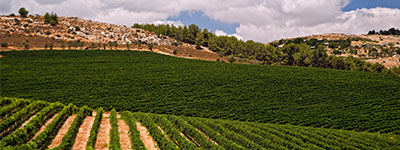 galilee-wine-region